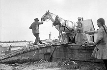 Unloading a horse from a canal boat