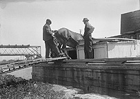 Lowering a mule into the bow of a canal boat